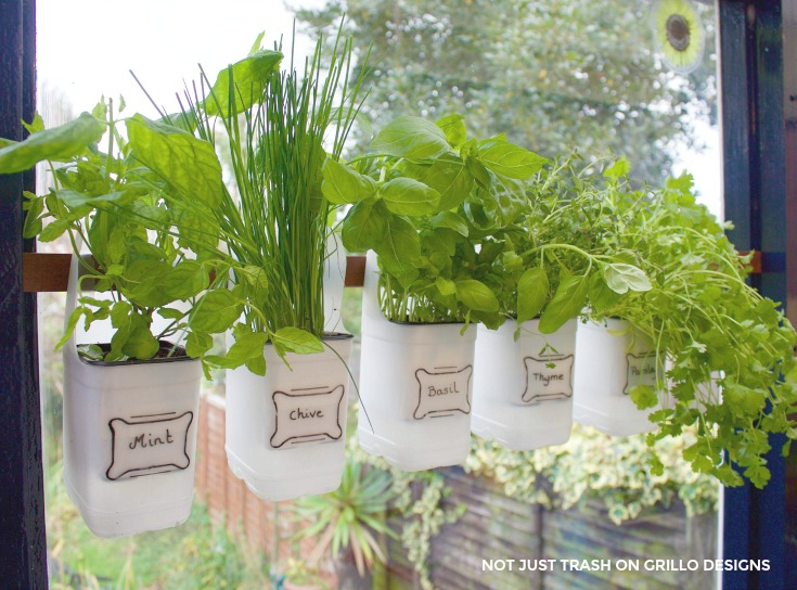 Indoor Bottle Herb Garden