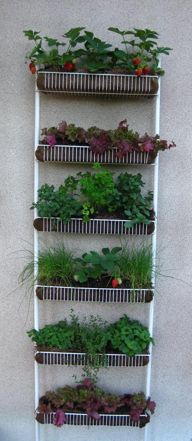 Repurposed Kitchen Spice Rack Vertical Garden