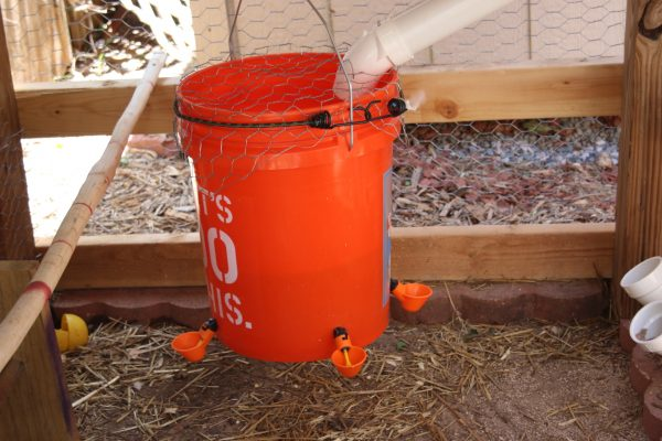 Chicken Waterer