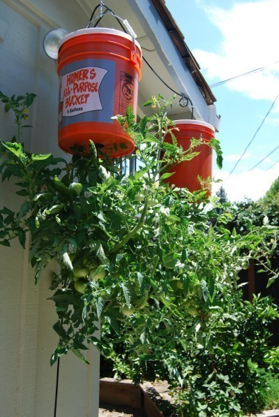 Upside Down Tomato Planter